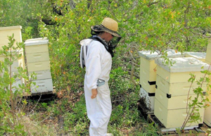 Isabella Ballestas tends to some of their 600 organic hives throughout 12 locations in the Keys.