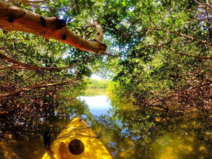 Glide through the Lower Keys' shade-dappled shallows in a kayak, exploring primeval-looking mangrove forests.