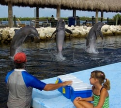 Mandy signals the dolphins for a high jump, while his granddaughter looks on.
