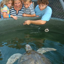 Moretti and his staff treat injured sea turtles and, when possible, return them to the wild. If release isn't feasible, the creatures become permanent residents.