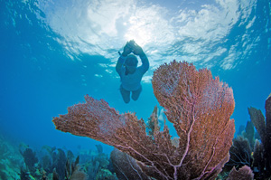 REEF Fest includes snorkeling, diving and eco-adventures on the water at America's best fish-filled coral reefs with some of the most prestigious names in marine conservation. Image: Janice Carter/Scuba Diver Girls