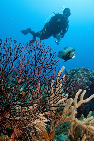 Ocean enthusiasts are encouraged to join REEF Fest to learn more about the marine environment. Image: Tim Grollimund