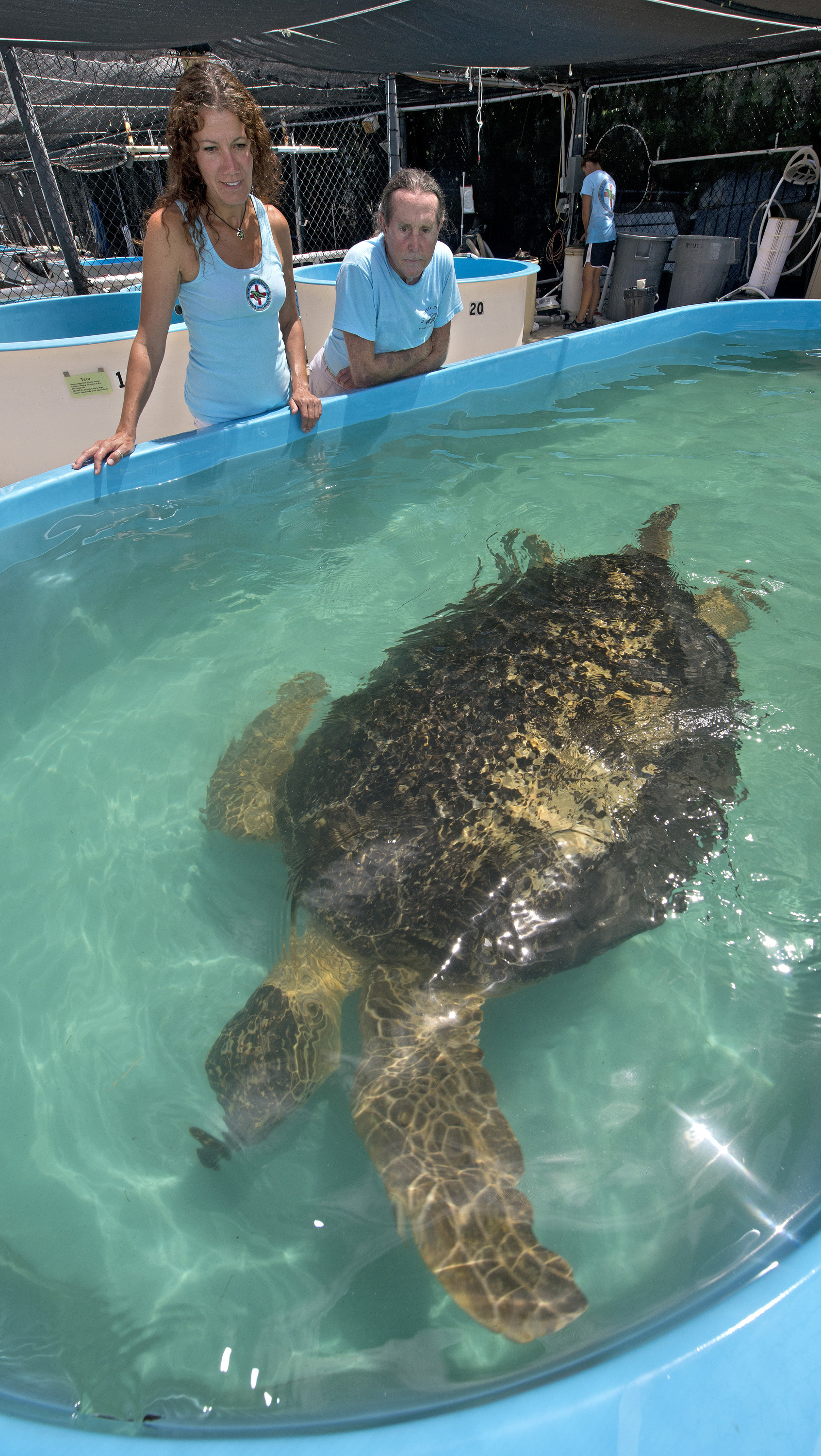 The Turtle Hospital in Marathon opened in 1986 as the world's first state licensed veterinary sea turtle hospital.