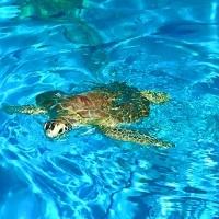 Vivez un séjour nature unique dans les Florida Keys