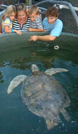 A Turtle Hospital staffer, right, shows visitors to the center a female green sea turtle that underwent treatment for intestinal ailments.