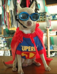 """Superdog"" Javier is ready to tackle any job."